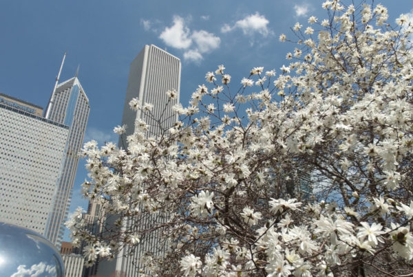 Things to Do in Chicago in May
