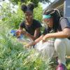 Urban Farming Chicago